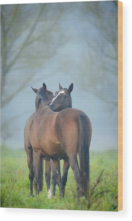 Action Wood Print featuring the photograph Grooming Horses by Andy-Kim Moeller