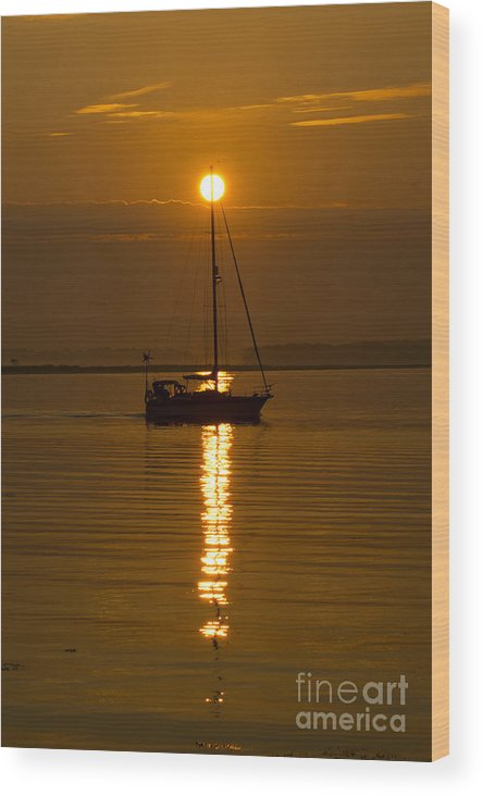 Sail Wood Print featuring the photograph Guided by Joe Geraci