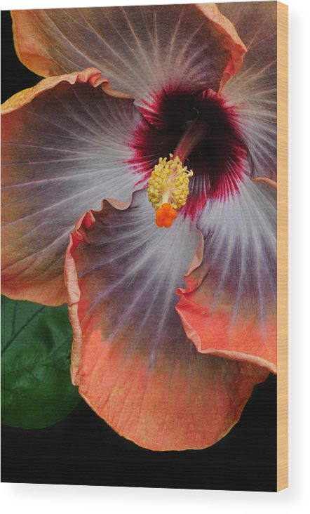 Hibiscus Wood Print featuring the photograph Hibiscus Key Largo by Dave Mills