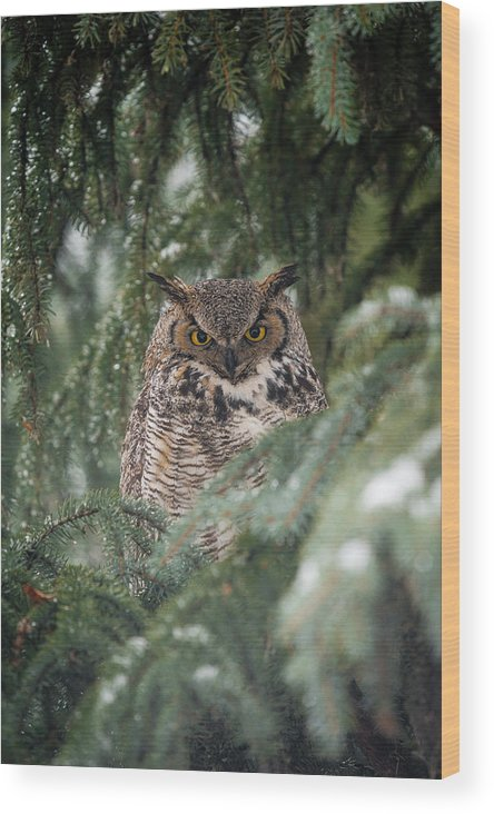 Animal Wood Print featuring the photograph Hidden by Kyle Breckenridge