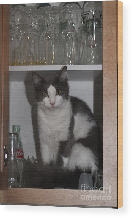 Cat Wood Print featuring the photograph Hiding In The Cabinet by Michelle Powell