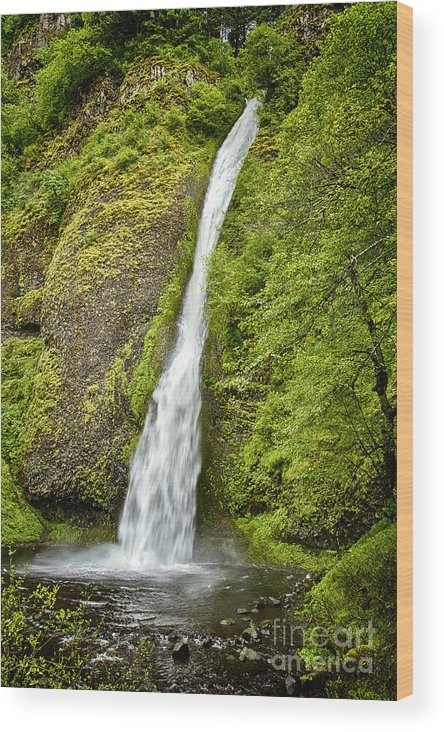 Horsetail Fall Wood Print featuring the photograph Horsetail Falls by Carrie Cranwill