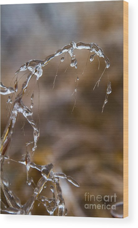 Ice Wood Print featuring the photograph Ice Crystals 1 by Jim McCain