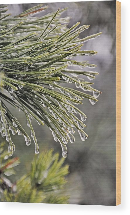 April Wood Print featuring the photograph Ice Storm Remnants Vll by Theo OConnor