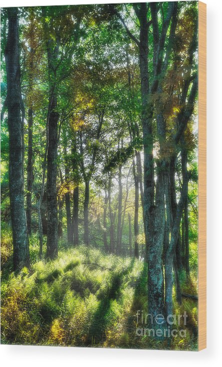 North Carolina Wood Print featuring the photograph Into The Light I - Blue Ridge Parkway by Dan Carmichael