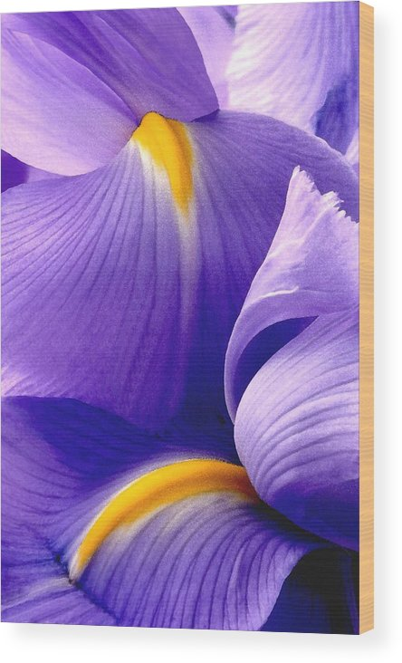 Iris Wood Print featuring the photograph Iris Vi by Michael Moschogianis