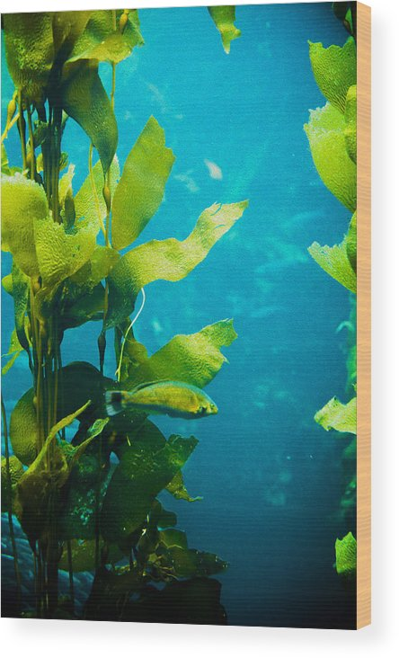 Kelp Wood Print featuring the photograph Kelp One by SFPhotoStore