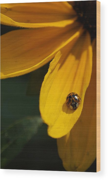 Ladybug Wood Print featuring the photograph Lady Bug by Mike Julian