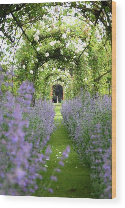 Lavender Wood Print featuring the photograph Lavender Walk by Jean Innes