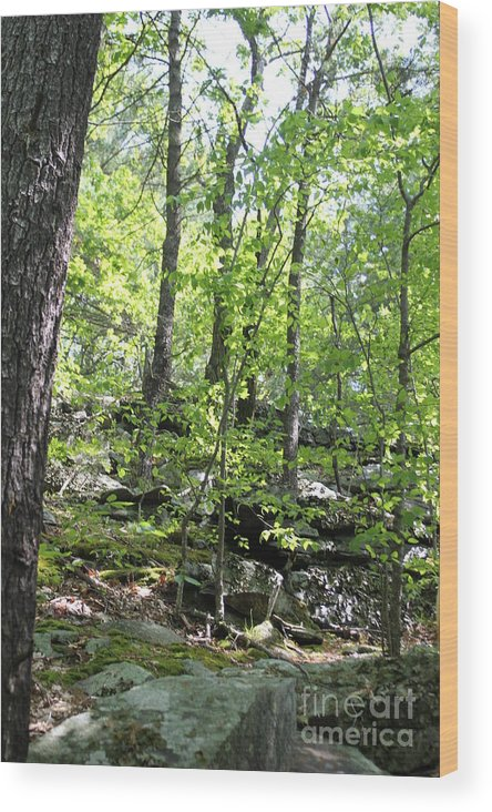 Crow Hills Wood Print featuring the photograph Leominster Massachusetts State Reservation by Spirit Baker