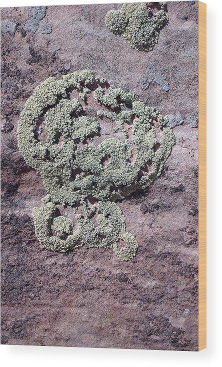 Lichen Wood Print featuring the photograph Lichen Patterns by Susan Woodward