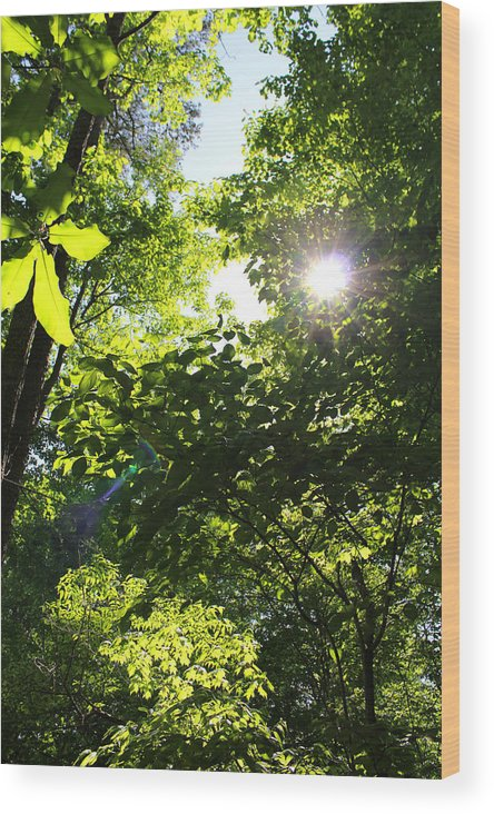 Light Wood Print featuring the photograph Light Dancing by Sandra Pearsall