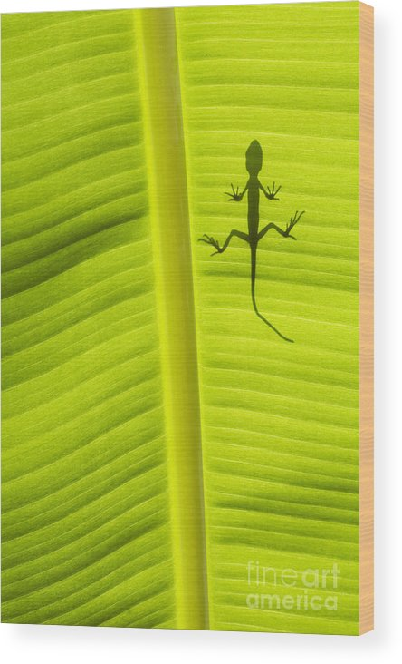 Lizard Wood Print featuring the photograph Lizard Leaf by Tim Gainey