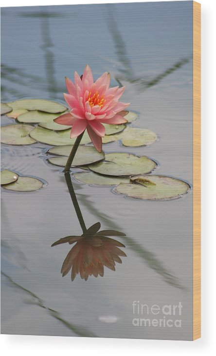 Lily Wood Print featuring the photograph Lone Beauty by Christiane Schulze Art And Photography