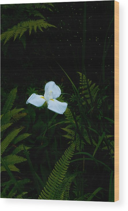 Flora Wood Print featuring the photograph Lone Special Iris by Wendy A Rosier