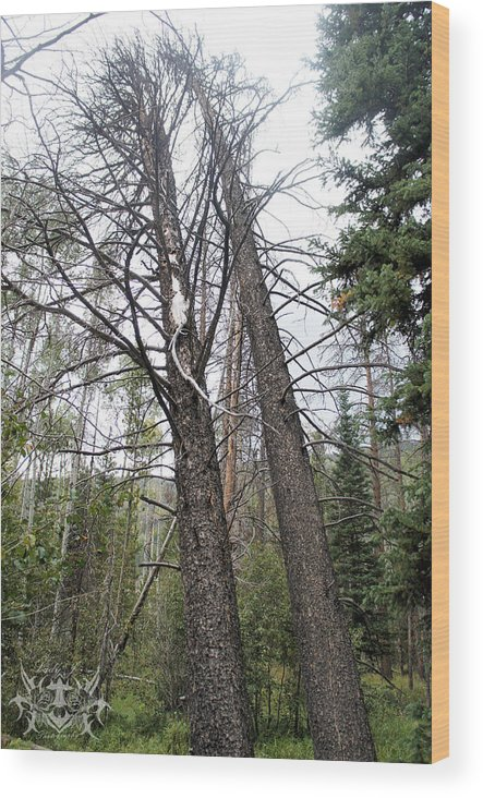 Tree Wood Print featuring the photograph Looking Up by Lady J Photography