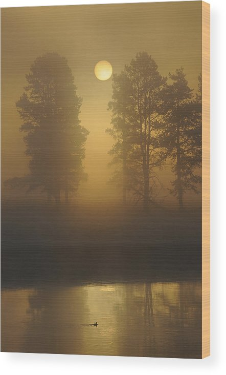 Landscape Wood Print featuring the photograph Misty Morning I by Sandy Sisti