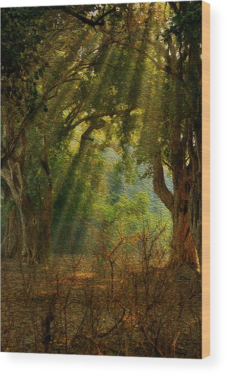 Light Wood Print featuring the photograph Morning Glory by Manjot Singh Sachdeva