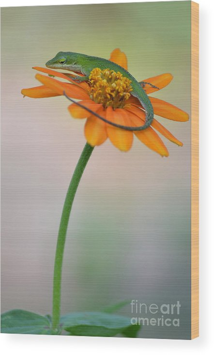 Lizard Wood Print featuring the photograph My Pedestal by Kathy Gibbons