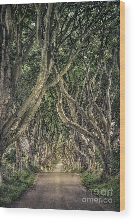 Dark Hedges; Hedges; Ireland; Northern Ireland; Britain; Road; Dark; Tree; Trees; Stick; Brunch; Leaves; Green; Passage; Way; Corridor; Tunnel; Mood; Moody; Mystic; Mystical; Mystery; Mysterious; Country; Countryside; Rural; Nature; Landscape; Kremsdorf; Evelina Kremsdorf Wood Print featuring the photograph Mysterious Ways by Evelina Kremsdorf