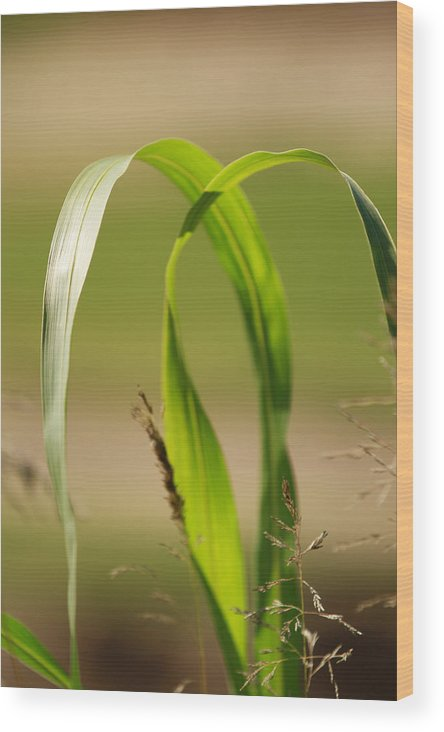 Nature Wood Print featuring the photograph Natural Grass by Tinjoe Mbugus