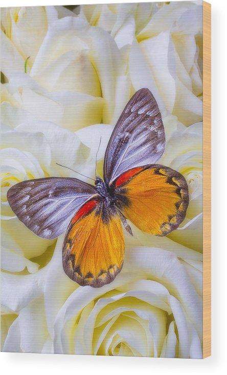 Orange Gray Wood Print featuring the photograph Orange Gray Butterfly by Garry Gay