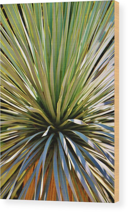 Barcelona Wood Print featuring the photograph Palm by Christopher Hoffman