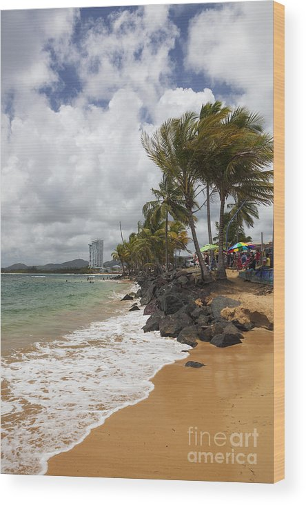 Idyllic Wood Print featuring the photograph Palms Trees Along Luquillo Beach by Bryan Mullennix