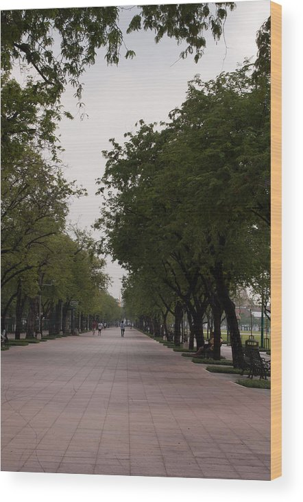 Nature Wood Print featuring the photograph Park Leading To The King Of Thailands Palace by Jill Mitchell