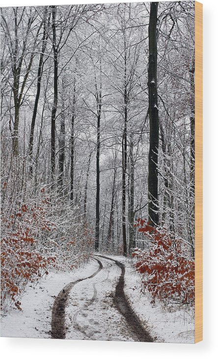 Landscapes Wood Print featuring the photograph Path In A Forest In Winter In The Countryside In Denmark by Jean Schweitzer