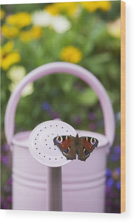 Peacock Butterfly Wood Print featuring the photograph Peacock Butterfly by Tim Gainey