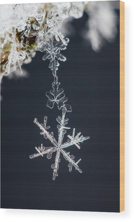 Macro Wood Print featuring the photograph Pendant by Sami Ritoniemi
