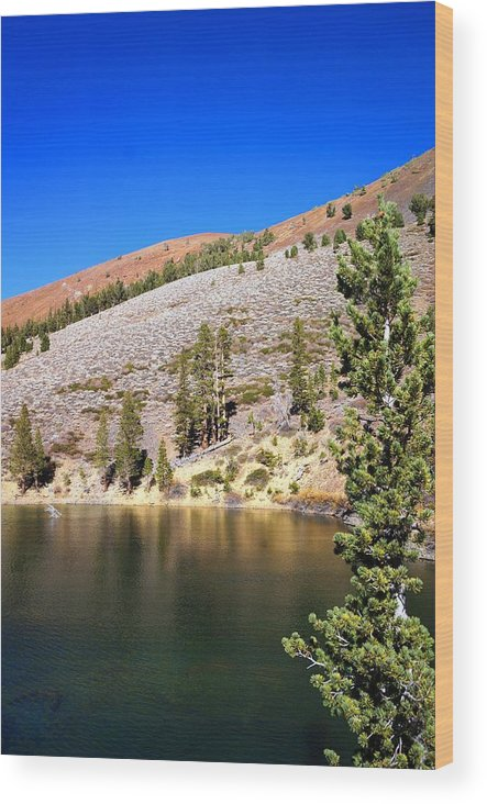 Pine Lake Wood Print featuring the photograph Pine Lake by Julia Ivanovna Willhite