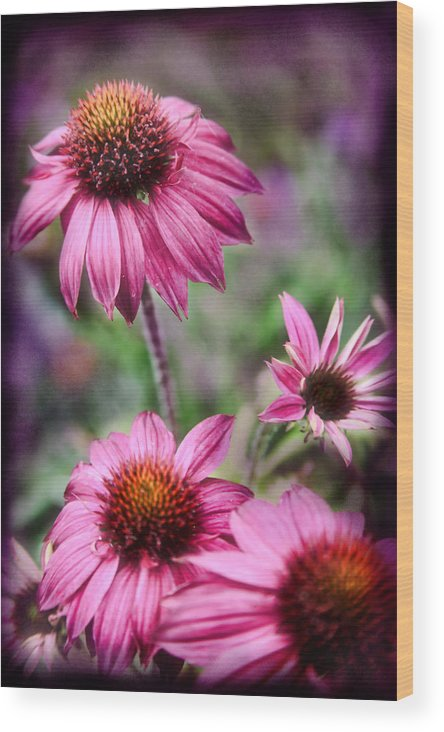 Daisies Wood Print featuring the photograph Pink Daisies by Sally Bauer