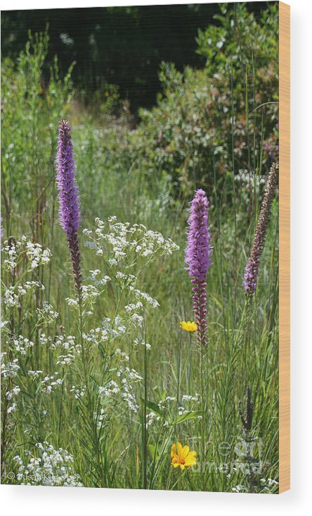 Flower Wood Print featuring the photograph Prairie Blossoms by Susan Herber
