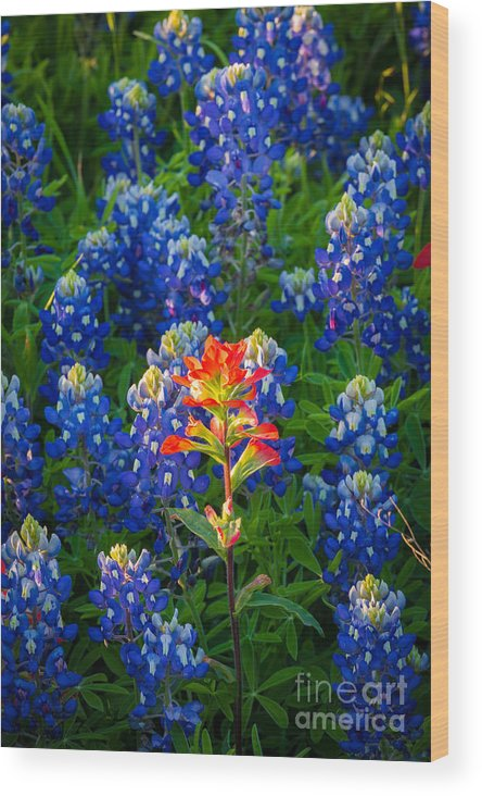 America Wood Print featuring the photograph Prairie Fire by Inge Johnsson