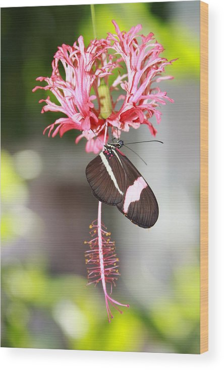 Floral Wood Print featuring the photograph Pretty In Pink by Karen Harper