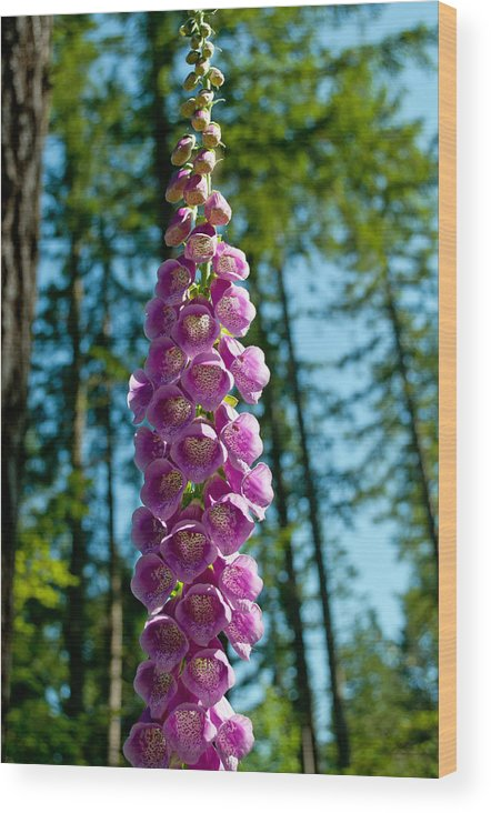 Foxglove Wood Print featuring the photograph Purple Foxglove Stem by Tikvah's Hope