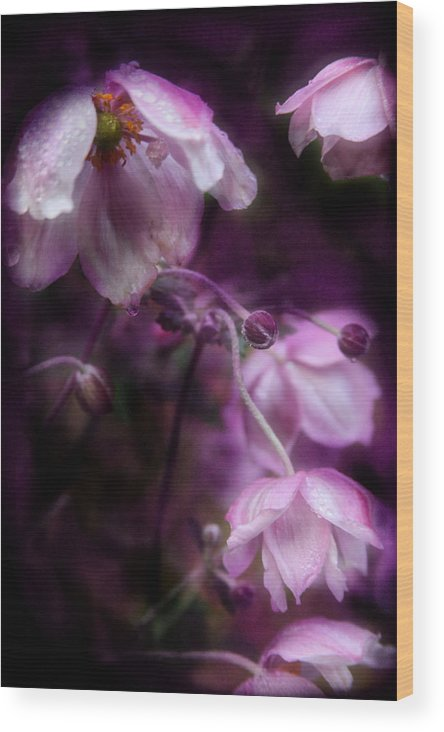 Flower Wood Print featuring the photograph Purple Perennial Flowers by Sally Bauer