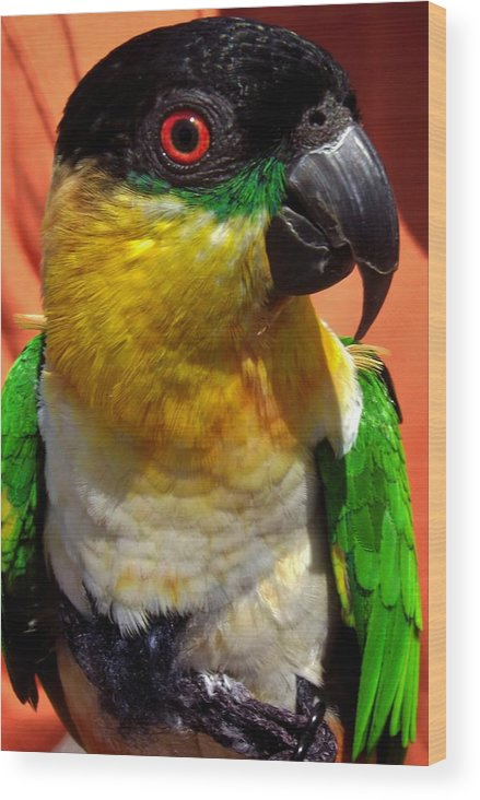 Parrot Wood Print featuring the photograph Rare Bird by Lori-Anne Fay
