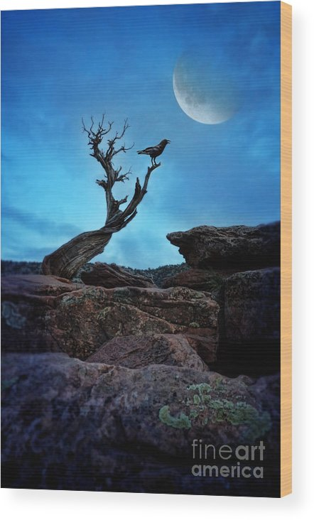 Raven Wood Print featuring the photograph Raven On Twisted Tree With Moon by Jill Battaglia