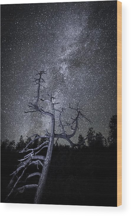 Nancy Strahinic Wood Print featuring the photograph Reaching For The Stars by Nancy Strahinic
