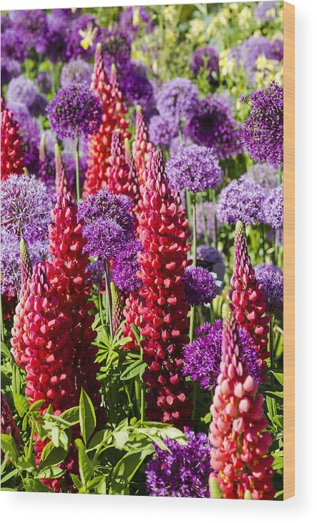 Blooms Wood Print featuring the photograph Red And Purple #1 by Gerry Walden