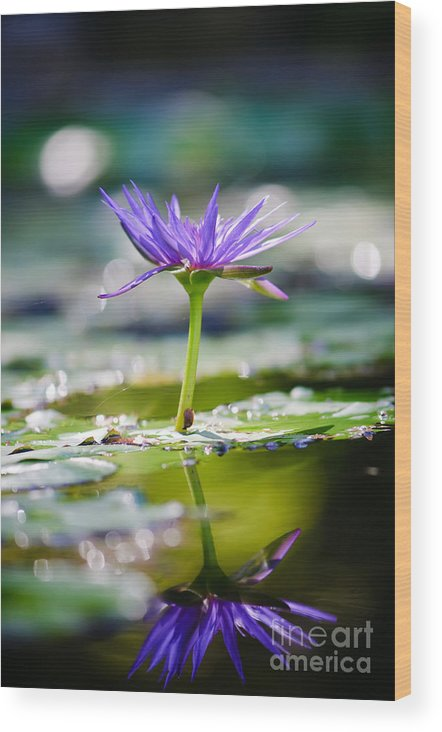 Flower Wood Print featuring the photograph Reflection Of Life by Charles Dobbs