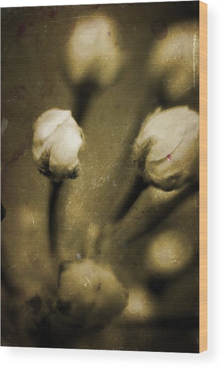 Flowers Wood Print featuring the photograph Renewal Of Life by Timothy Bischoff