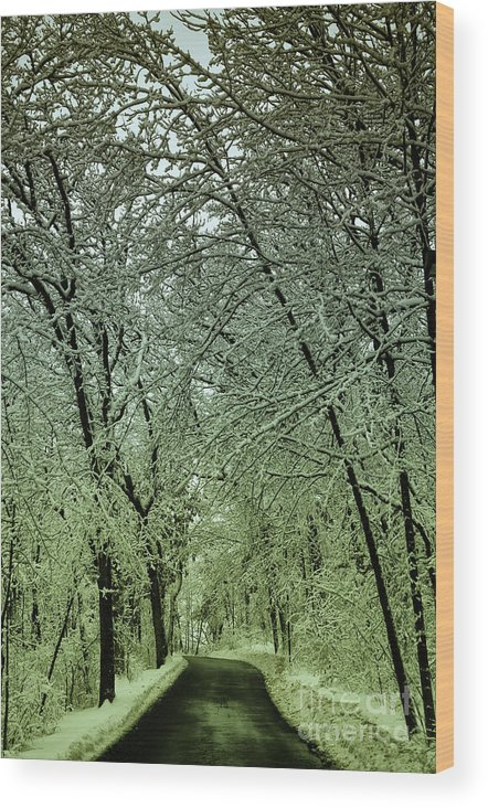 Snow Wood Print featuring the photograph Road In Snow Covered Forest by Birgit Tyrrell
