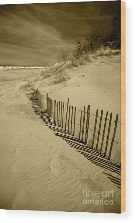 Sand Dunes Wood Print featuring the photograph Sand Dunes And Fence by Timothy Johnson