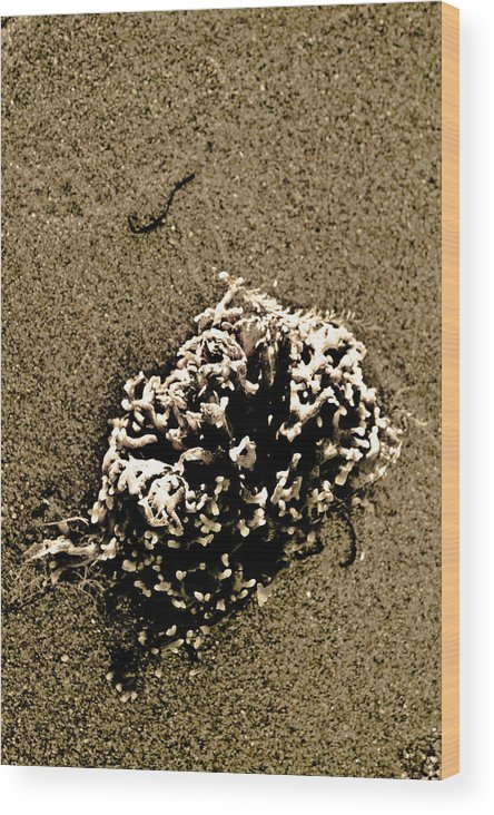 Seaweed Wood Print featuring the photograph Seaweed 2 by Jacin Buchanan