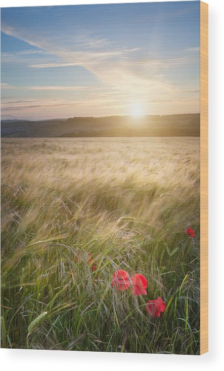 Poppy Wood Print featuring the photograph Serene by Matthew Gibson