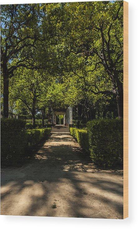 Seville Wood Print featuring the photograph Seville - Park Maria Luisa by Andrea Mazzocchetti
